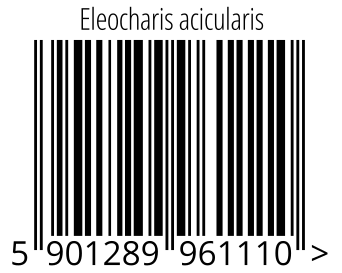 05901289961110 - Eleocharis acicularis