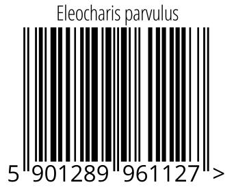 05901289961127 - Eleocharis parvulus