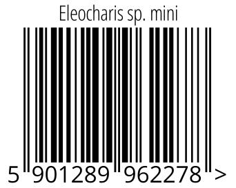 05901289962278 - Eleocharis sp. mini